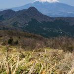 箱根の外輪山(金時山・明神ヶ岳・明星ヶ岳)でトレイルランをやってきた